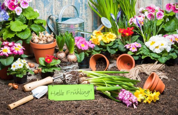 Farbenprächte Frühlingsboten: Bepflanzte Frühlingsschalen