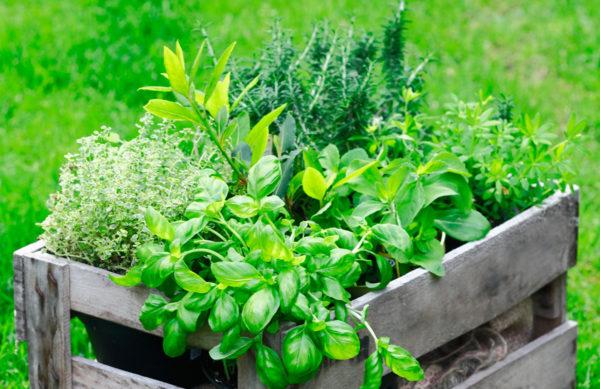 Kräuter & Gemüse
